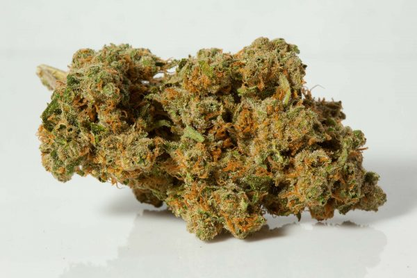 Moby Dick cannabis flower high THS strong Sativa