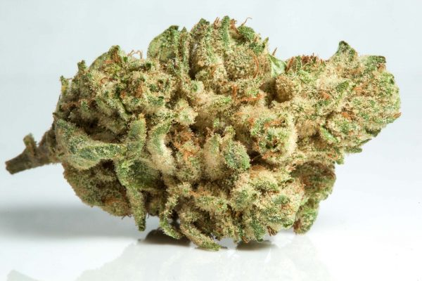 Gorilla glue 4 hybrid cannabis