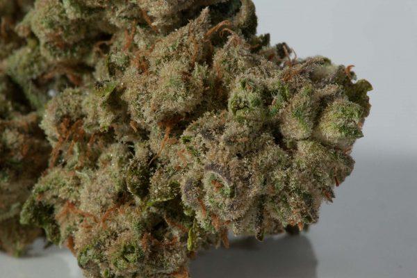 Black Gas Strain cannabis relaxing